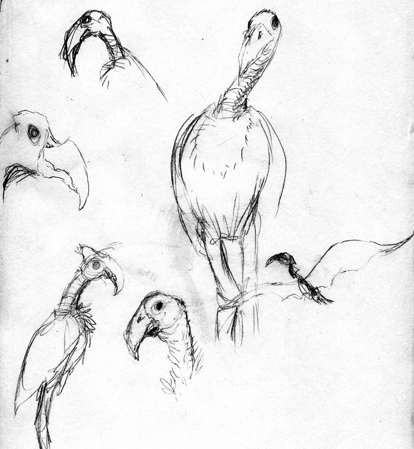 joshhagen_thegiantclaw_bigbirds